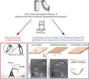 4D printing of continuous flax-fibre based shape-changing hygromorph biocomposites: Towards sustainable metamaterials